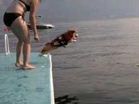 水が怖い犬が勇気をふりしぼった瞬間