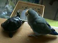 この鳥クソワロタwwwwwしれっと極悪な事をするトリさんの動画wwwww