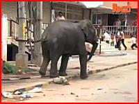 インドで野生の象が町に乱入して大暴れしパニックに。牛や人間を襲い一人死亡