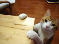 高速カリカリ。ニャンコらしくない動きをする猫の動画にほんわかしましたw