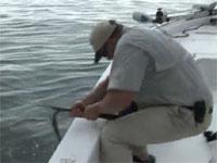 釣竿をへし折られながらも巨大魚を釣る!約2.4mのゴライアスグルーパー