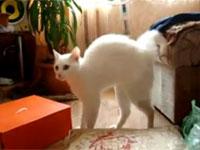 あり得ない動きでフェードアウトするネコ。なにをどうしてそうなったw