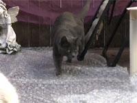 ぷちぷち地雷原に翻弄される猫たち
