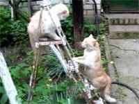 百烈拳を使うネコと一撃必殺を狙うネコの戦い。ロシアはニャンコもおそロシア