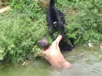 酔っ払った男性が動物園の猿の檻に落下。サルたちに襲われてしまう映像。