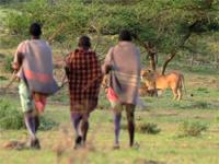 盗人猛々しさ全開!ライオンから堂々と肉を盗む3人組。