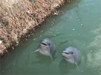 ルーマニアの川に突如2匹のイルカが出現?せっかくだからお菓子を与えてみたところ・・・