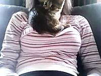 おっぱいの上が好きすぎる子猫。下ろしてもすぐ戻る。巨乳フェチなネコ。