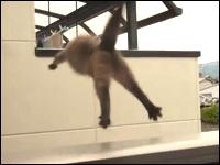 家主に見つかりベランダから逃走を図るネコが・・・。この後どうなったw
