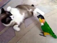 猫に果敢に勝負を挑むインコ