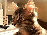 このネコ糞カワイイwと海外で話題になっているニャンコちゃんのビデオ。