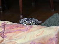 そ〜っと覗いてそ〜っと隠れるニャンコが可愛い動画。めっちゃ確認してるw