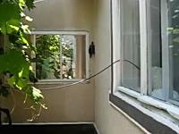 落ちたら死ぬぞ。彼にとってその高さは命取りだと思う。壁登りカメさん動画。