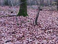 森の中を散歩していたらイノシシが突撃してキタ-!!これはカワイイ動画