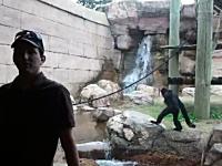 動物園で記念撮影をしようとしていたら後ろのヤツ(檻の中)が凄かった動画