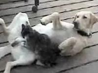 猫「もみもみ」 ワンコ「あっ・・そこ・・・そこ良い・・・あっ」