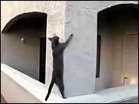 忍者かよ。身体能力が高すぎるネコたちの映像集(5猫)。ニャンジャだった。