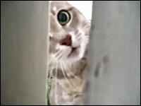 ヤバい。本気になったニャンコは怖いw猫に襲われるカメラマンw