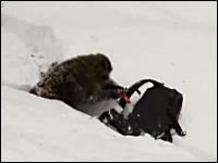 雪崩用エアバッグに焦りまくるお猿さんのビデオ。どんなイタズラだよw