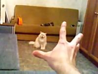 ハンドパワーの力に操られてしまうネコの映像。最後のお前はでてくんなw