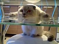 このネコわろた。変な姿勢でテーブルに挟まってリラックスしているニャンコ。