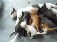 ママン大変すぎるwママ猫のおっぱいに16匹の子猫が群がってさあ大変