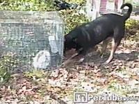 プリズン・ブレイク犬。穴を掘って檻の中のウサギちゃんの脱出を助けるワンコ