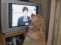 笑ったら負け。ジャパネットの社長が好きすぎる犬