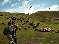 チベットの葬儀「鳥葬」の様子を撮影した写真。遺体をハゲワシに食べさせる
