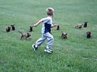 ほのぼの動画。小ニンゲン+小ワンコ×11匹=カワイイ。子犬の群れに萌え