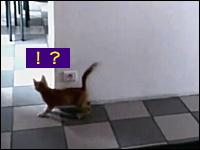 壁に隠れてこっそり忍び寄ったら「あれっ!?」ネタのような展開の子猫2匹。