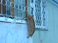 会いたかったー♪会いたかったー♪会いたかったー♪ミャーオ。ロマンチックな猫