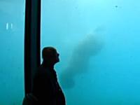 「ばーん!」水族館のシロクマがブロックで水槽のガラスを破壊してしまう。