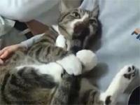 自分のをしゃぶる猫が可愛すぎる