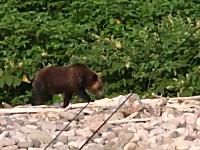 人間慣れした熊には鈴も爆竹も効果が無い。釣りをしてたら大きな熊が・・・。