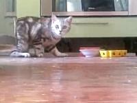 食事中の姿を誰にも見られたくないちょっと内気なネコさんの行動が可愛い