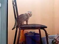 この猫ワロタ。約40秒間も延々と焦り続けている猫さんを撮影したビデオw