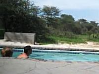 プールに入っていたカップルを固まってしまうくらい驚かせた訪問者とは??