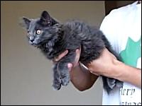 猫スタビライザー。高価で複雑なジャイロスコープなんて必要なかったんや。
