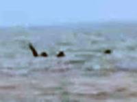 スケッグネス・モンスター?英リンカンシャー州の沖で、コブのある謎生物が目撃される