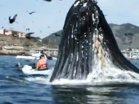 でけえ。食われてた可能性もあるんじゃないか?という距離でクジラがどーん