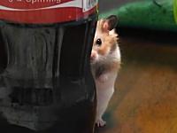 コカコーラのボトルの奥からジーっと見つめるハムスターが可愛いwww