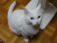 猫 「いや、俺の方が格上だから。」 そっと踏むと、そっと踏み返す猫。