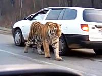ロシアでは道路で出会う野生動物までもがおそロシア。かっけえw