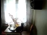 猫 「やるぞ・・やってやる・・・」 理想と現実の違いを思い知った猫ww