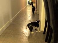 3秒劇場。本人は威嚇しているつもりらしい猫ww