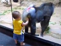 シュールww 尻の穴を見せつけたいマンドリルと、尻の穴に興味を示す赤ちゃんww
