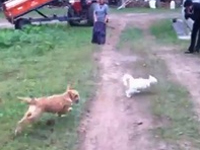 犬 VS 猫。追いかけられる猫の超スマートな回避テクが素晴らしいw