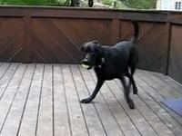 犬 「ボール投げてー!もっとー!・・・ちょwwwおまwww」