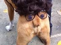 尻がハロウィン仕様の犬ww 尻尾の鼻が可愛すぎるwww